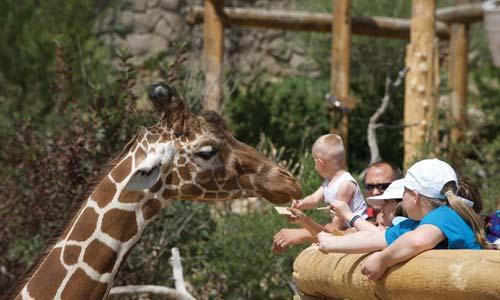 Colorado Springs Zoo